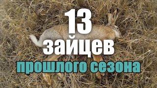 Охота на зайца - Лучшие моменты - Трофеи, выстрелы, работа собаки / Hare hunting 2015