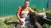Топиарий в саду | Hitsad.ru - YouTube