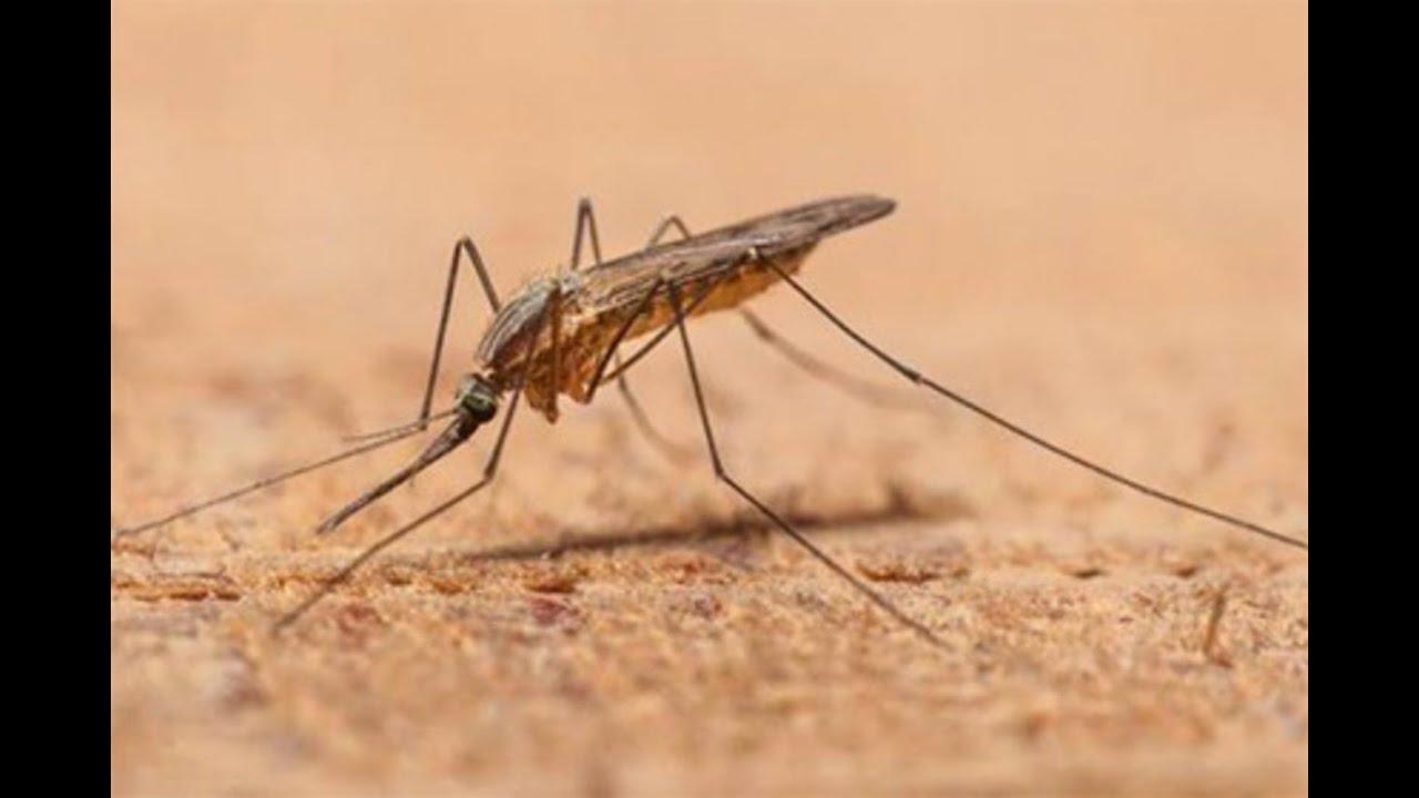 Как- Я- спасаюсь от комаров .
