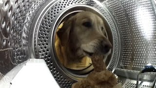 Hidden Camera Catches Dog Getting His Teddy Bear From The Washing Machine