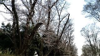 正しくは「花の雲鐘は上野か浅草か」でした。 面白かったら投げ銭くださ...
