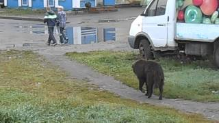 Странная собака в Вологде ч.4