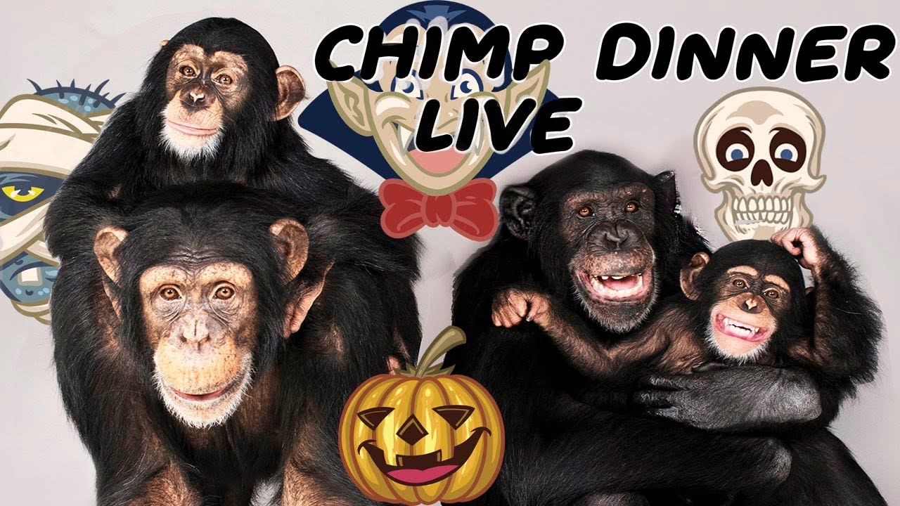 The one and ONLY Chimp Dinner Live | Oct 24th