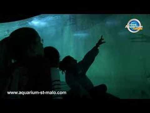 Plongée avec les Requins: Grand Aquarium - Saint Malo
