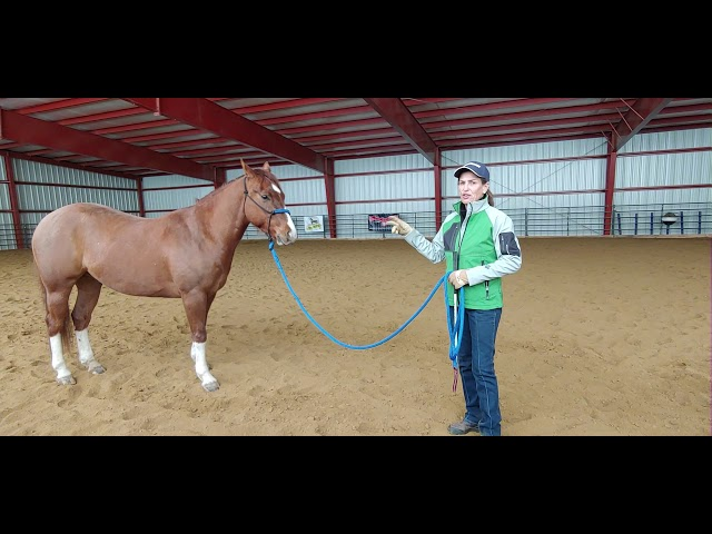 Daily Dose of Horsemanship Homework: Ground Manners #1 Establishing Boundaries