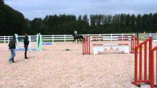9 years old gelding by Quick Star