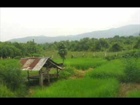Thai Isaan song Pornsak Luk thung