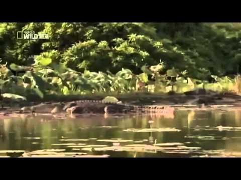 Killertiere - Deutsche Doku 2014