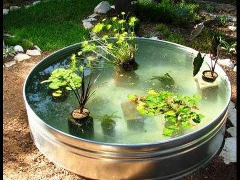 Посадка водяной лилии в пруд вариант (USA) американка с голой .