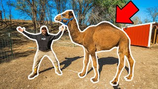I Bought a GIANT CAMEL for My BACKYARD FARM!!! (Bad Idea?)