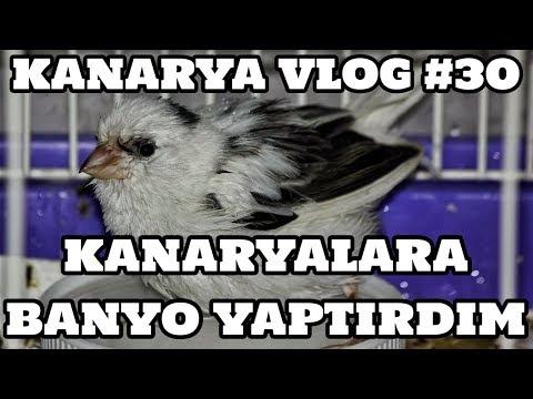 Kanarya Vlog #30 (Kanaryalara Banyo Yaptırdım)