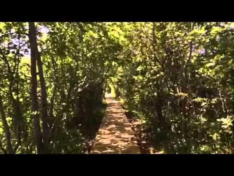 Maine Path