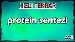 Protein Sentezi - Hızlı Tekrar