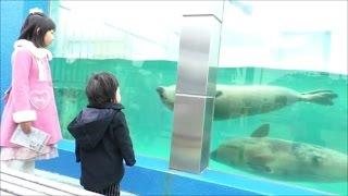 ★aquarium「dolphin&penguin&seal」★南知多ビーチランドで「イルカやアザラシ」を見たよ★ thumbnail