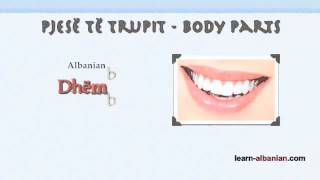Body Parts in Albanian / Learn Albanian language