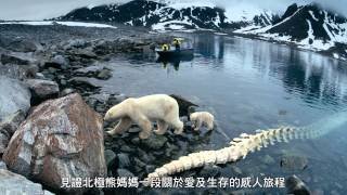"OMNIMAX Show ""To the Arctic"" (北極熊心) Trailer"