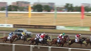 Большие скачки чистокровных лошадей прошли на Кубани