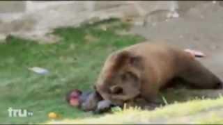 медведь напал на человека