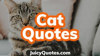 Top 15 Cat Quotes and Sayings 2019 - (About The Cutest Cats)