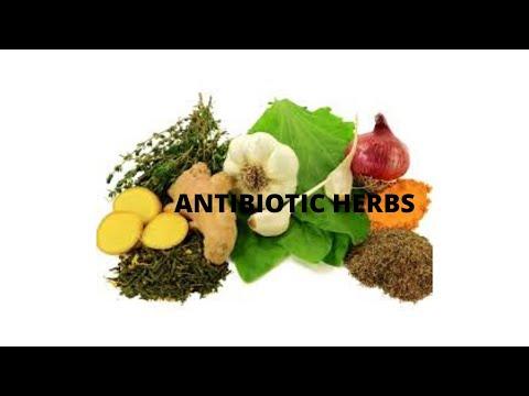 Antibiotic herbs