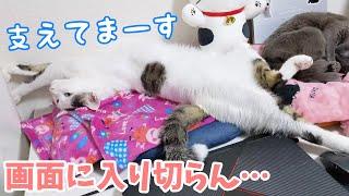 壁を支えながら寝る不思議な猫チロさん