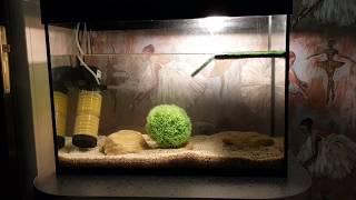 Красноухая черепаха и болотная черепаха в новом террариуме