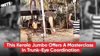 Kerala Jumbo Offers A Masterclass In Trunk-Eye Coordination