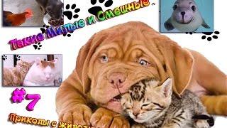 Самое смешное виде про животных под музыку.Такие милые и смешные #7