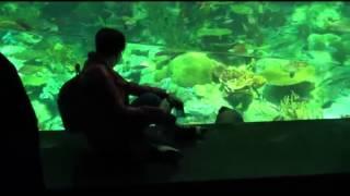 Гонконг достопримечательности. Ocean Park - Гонконг.(Достопримечательности Гонконга. Ocean Park - Гонконг. Один из самых больших в Азии океанариумов и развлекательн..., 2013-04-18T15:08:55.000Z)