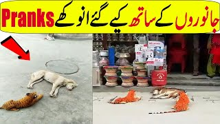 Most Crazy Pranks With Animals In Hindi/Urdu | Funny Animals Video