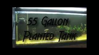 Cyberaquarist Contest Entry! 55 Gallon Planted Tank