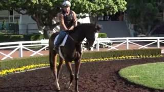 Lord Admiral: 1st Race Saturday at Santa Anita