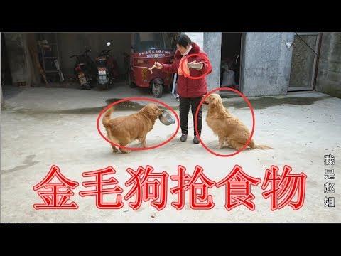 農村婆婆吃大席帶來好吃的,從金毛狗狗的表現上看,誰會吃的更多【我是趙姐】