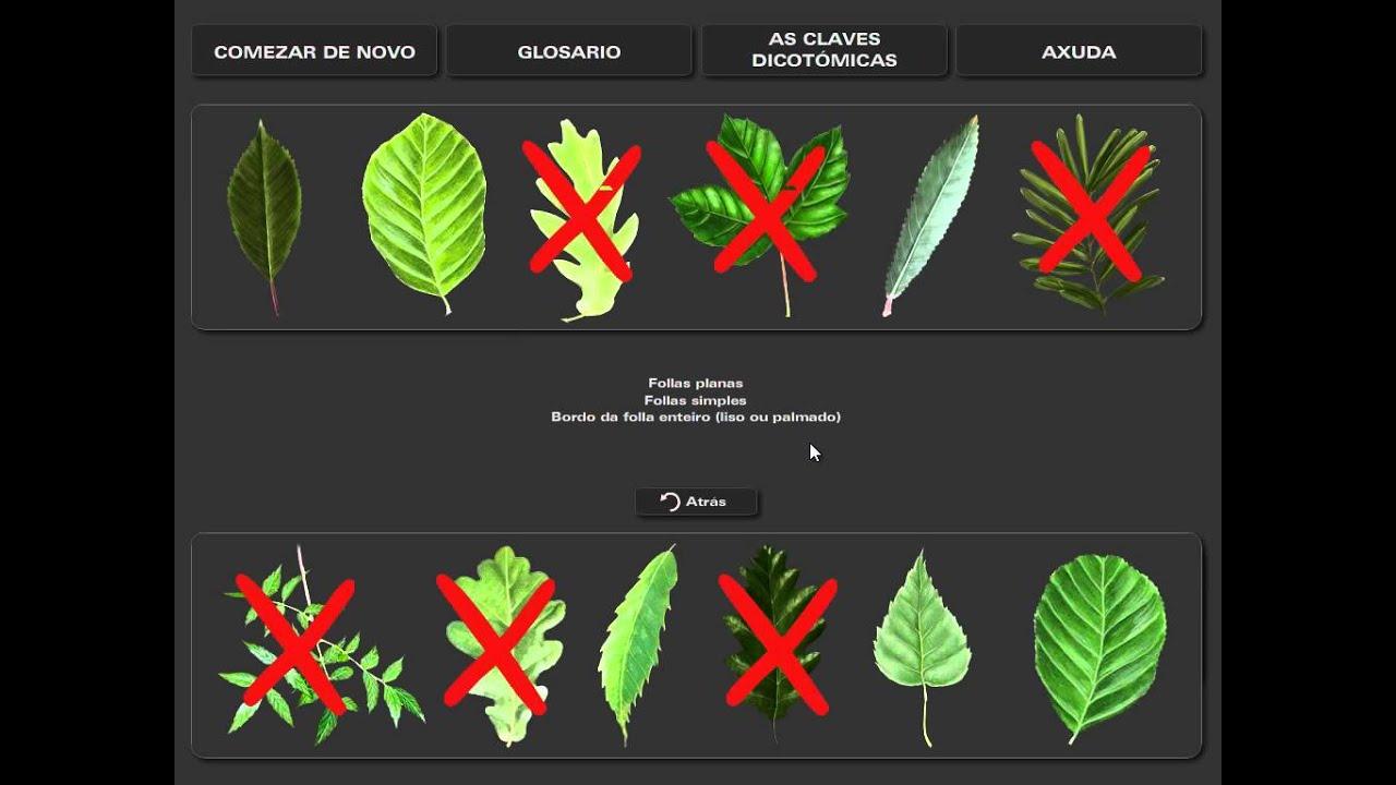 Clave dicot mica de hojas de rboles youtube for Arboles de jardin de hoja caduca