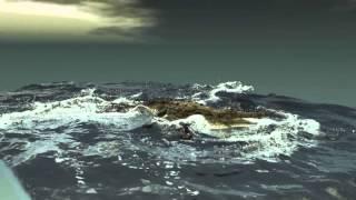 Alligator Walk on Water - RealFlow