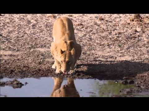 Superior Explorer Safari | Botswana