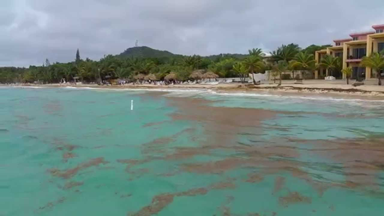 Beers and Beans | How We Did Roatan in 5 Hours - Beers and