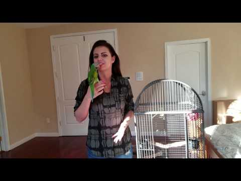 How To Put Your Parrot To Bed And How Much Sleep They Need | PARRONT TIP TUESDAY