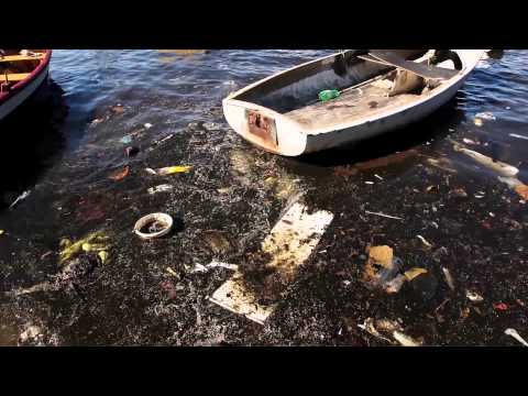 Brazil's Olympic Event Waters Include Dog Carcasses And Human Corpses