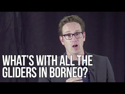 What's with all the Gliders in Borneo? | Dan Riskin