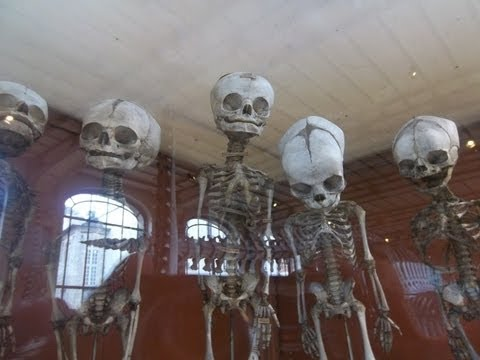 Creepy Places Global: Gallery of Paleontology and Comparative Anatomy