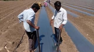 Mulching paper crops
