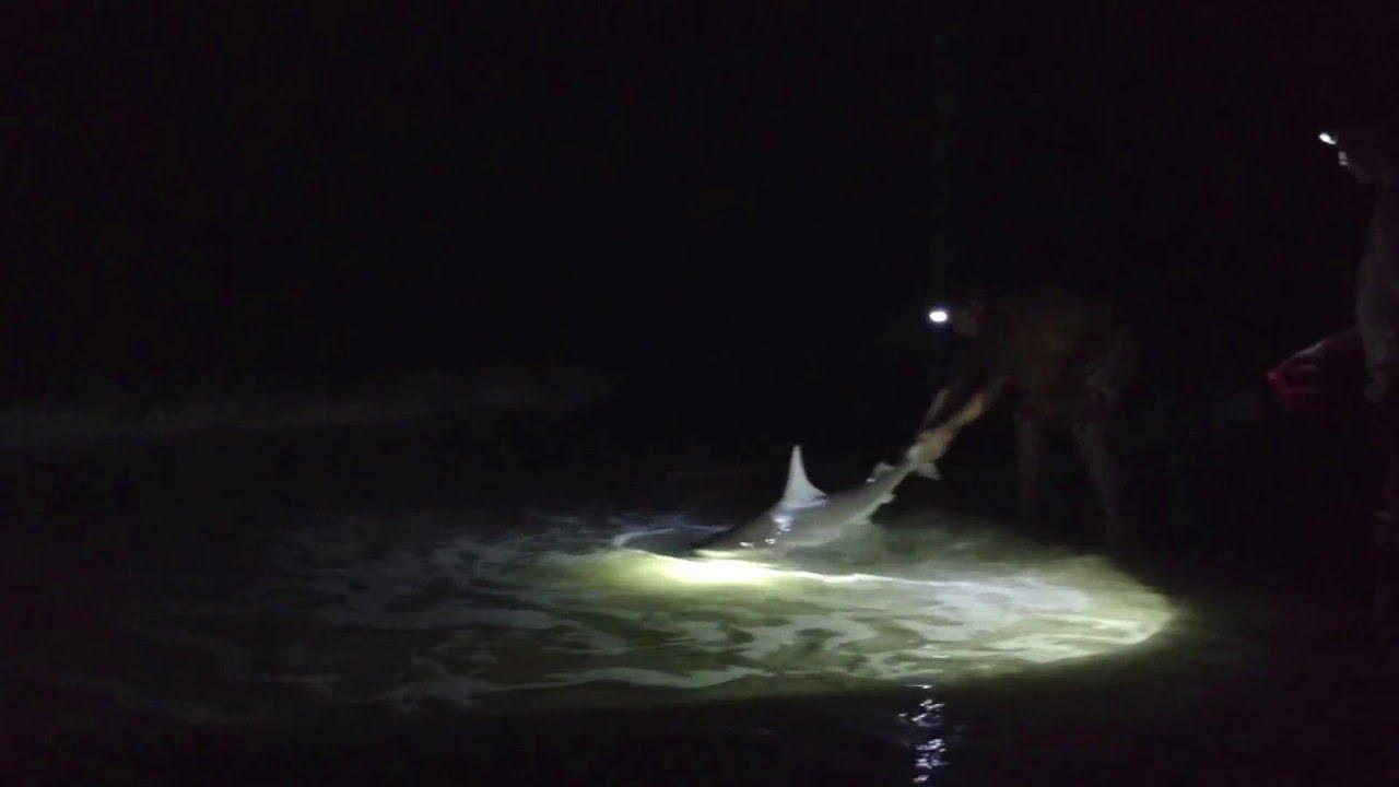 6ft black tip shark surf fishing cape san blas 2016 youtube for Cape san blas fishing