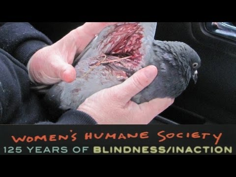 SHARK to Protest Women's Humane Society