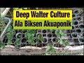 Deep Walter Culture Ala Biksen Akuaponik