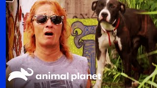 Rescued from Abandoned Katrina Ruins | Pit Bulls and Parolees