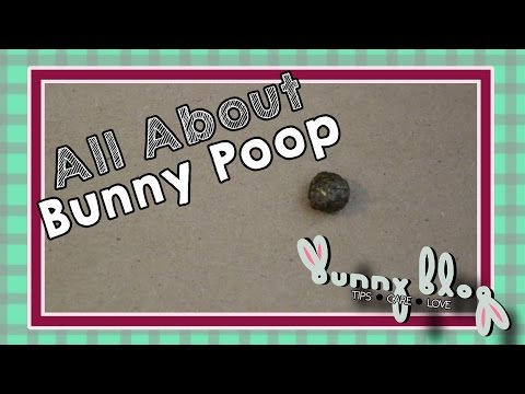 All About Bunny Poop! || Bunny Blog