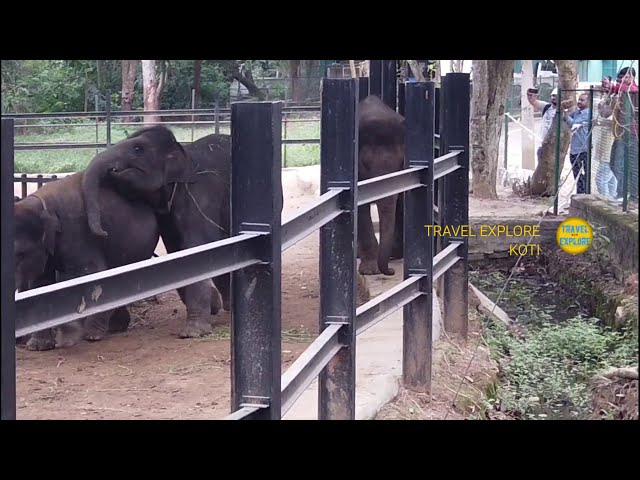 Elephants Play in ZOO at Bannerugatta Banglore