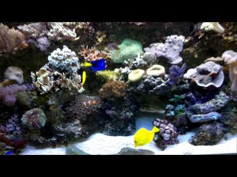 Der Blaue Planet | WDR & BBCиз YouTube · Длительность: 5 мин8 с