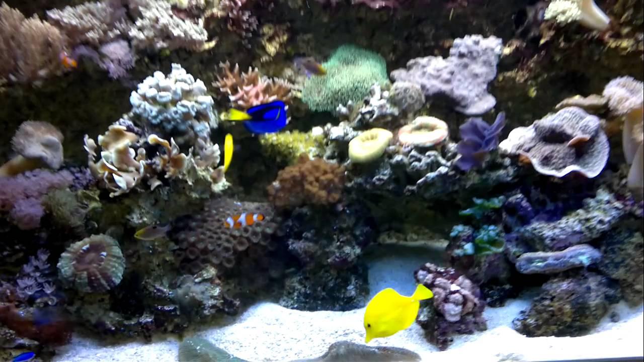 salzwasser aquarium hd youtube